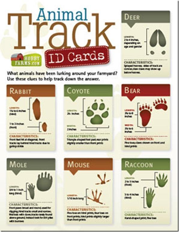 track-id